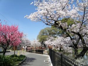 桃ヶ池画像